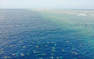澳洲科學家空拍幾萬隻綠蠵龜 壯觀無比