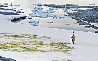 南極出現大量綠色的雪 從太空中都看得到