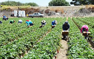 安省新增257人染疫 大部分為農場工人