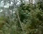 中共雲南普洱市林業和草原局表示,中老邊境的雲南普洱市出現黃脊竹蝗,已累計近10萬畝。(視頻截圖)
