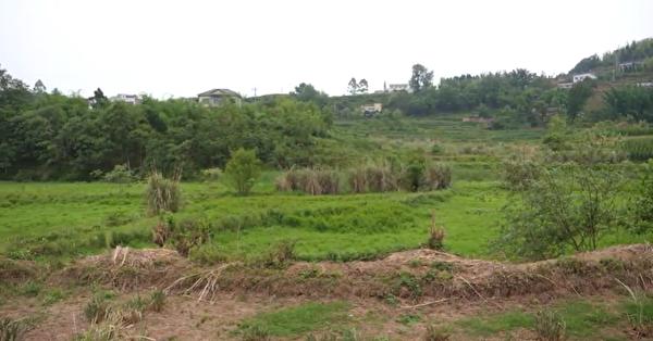 四川省自貢市富順縣一位農民發影片表示,當地政府讓5天內把所有荒地整理出來。(影片截圖)