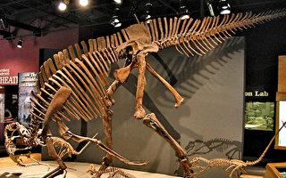 墨西哥发现新种恐龙 研判能发低频声音善交流
