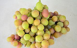 葡萄成熟了 去彰化采果吧