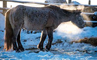 俄羅斯農民們智救陷入冰窟的7匹馬
