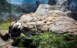国家动物园重新开放