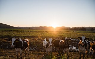 維州兄弟賣農場大賺八千萬 17年前險以26.5萬出售