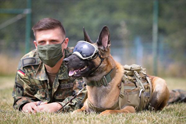 德國研究顯示服務犬可鑑別中共病毒感染者