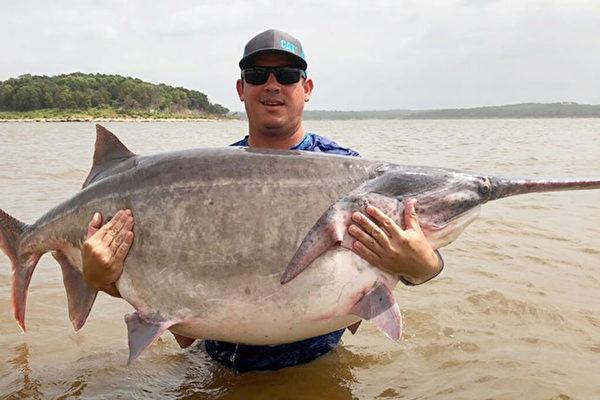 破世界纪录 美国男钓出146磅巨型匙吻鲟