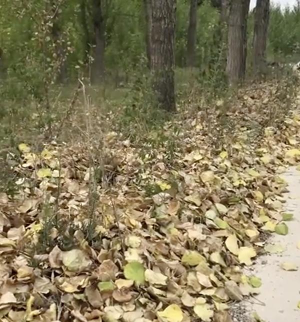 辽宁锦州,树木因缺水而枯黄掉叶。(视频截图)
