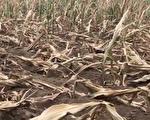 世界粮食计划署获诺奖 学者忧人类缺粮