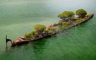 澳洲驚現「漂浮森林」157年棄船成孕育地