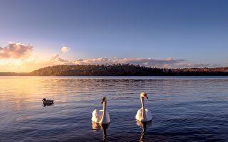 驀然回首:飛渡天涯 人在瑞典的意外故事