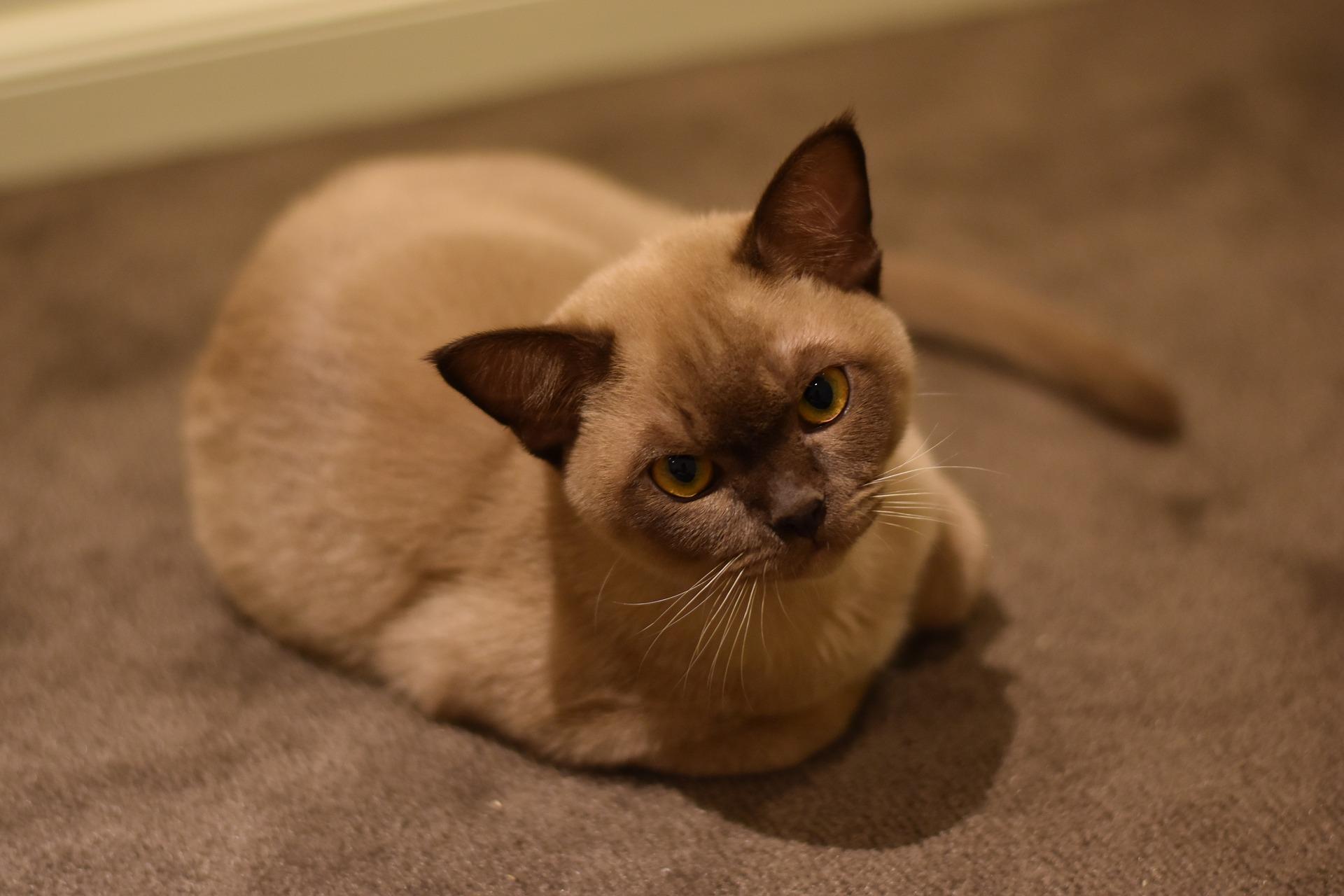 真有9條命? 澳洲小貓洗衣機內洗12分沒死