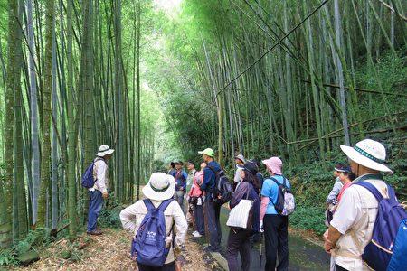 認識竹林,竹材的固碳效益。