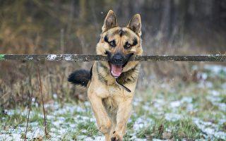 小狗帮盲人移除路障 网民:比人还有同情心