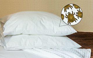 床單多久洗一次才衛生?清潔寢具的方法