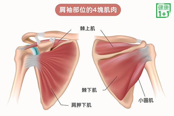 """""""肩袖""""又叫旋转袖,是指肩部的一组肌肉和肌腱。(健康1+1/大纪元)"""