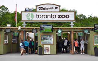 多伦多动物园周六开放 游园方式改变