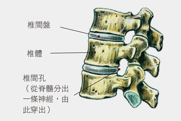 椎间盘受到压迫时,水分会被排掉,造成脊椎不适,这正是下背痛的源头。(方言文化提供)