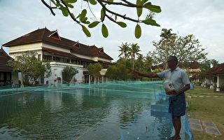 疫情下求生存 印度旅館用豪華游泳池養魚