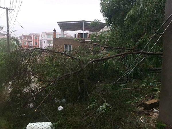 圖為颱風過後的漳州龍海市隆教鄉鎮海村。(受訪人提供)