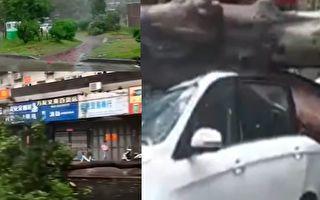 【视频】台风米克拉登陆 福建漳浦等地狂风暴雨