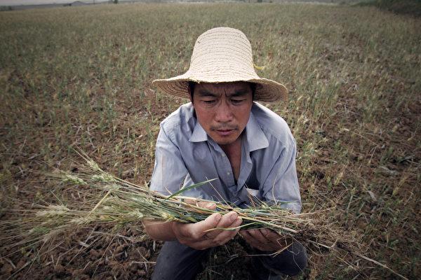 今年中國遭遇洪澇災害和乾旱天氣,影響到秋糧的收成,下半年糧食漲價因素有所增加。(ChinaFotoPress/Getty Images)