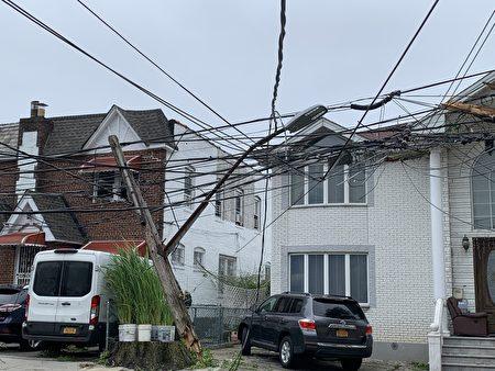 法拉盛友联街大树倒下,把电线杆砸断。