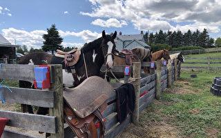 筑儿时梦 台人在加拿大经营马场称如中乐透