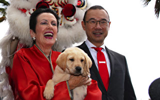 悉尼市議員自曝曾擔任和統會顧問