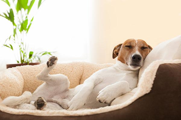 狗,dog, shutterstock