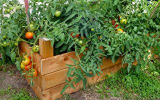 从种花到种菜