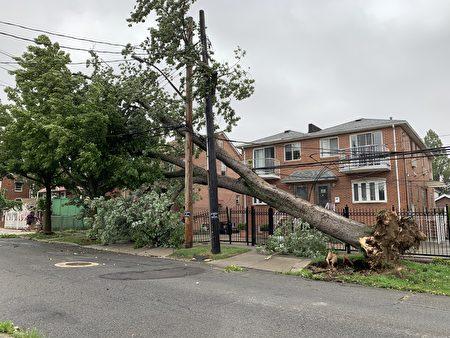 法拉盛友联街大树连根拔起,砸断电线杆,造成周边用户断电。