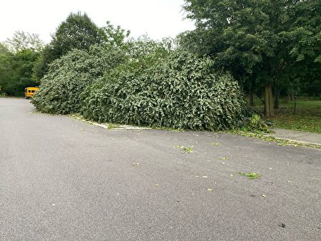 法拉盛凯辛娜走廊公园附近的树倒下。
