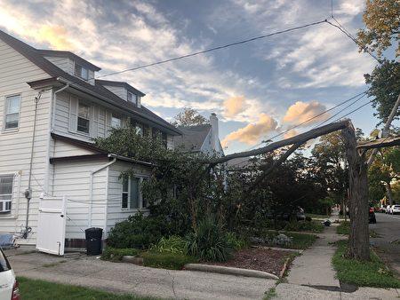 法拉盛161街大树倒下,砸到房顶。