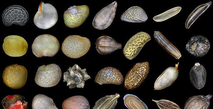 不明中國種子美50州警告 部分品種揭曉