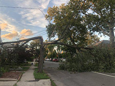 法拉盛161街大树倒下,拦腰倒在马路中间。