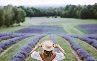 在魁北克領略薰衣草的夏天