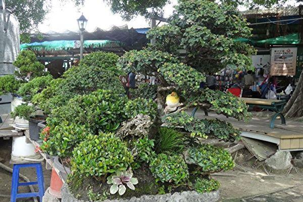 想招好运 绿色植栽助你提升居家风水旺运势