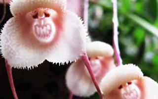 """植物界""""美猴王""""让你大开眼界"""