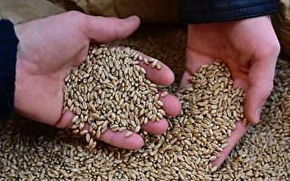 德國也出現不明中國種子包裹 專家:不要種