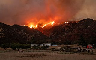 蘋果大火燒逾2.6萬英畝 柴油車排氣引發