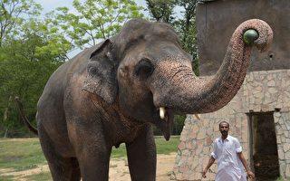 遭囚禁35年 世界「最孤獨大象」終獲自由
