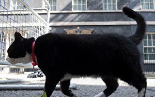 國際貓日前夕 英外交部首席捕鼠官宣布退休