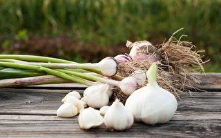 大蒜种植新技术可以调节蒜味浓度