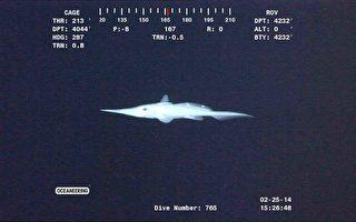 加拿大渔民捕获罕见长鼻银鲛 背鳍有毒