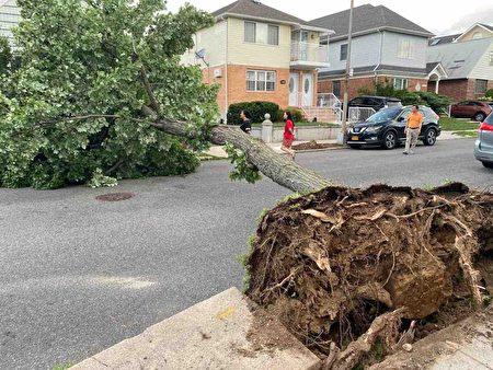 法拉盛Colden街的大树倒下,拦腰横在路中间。