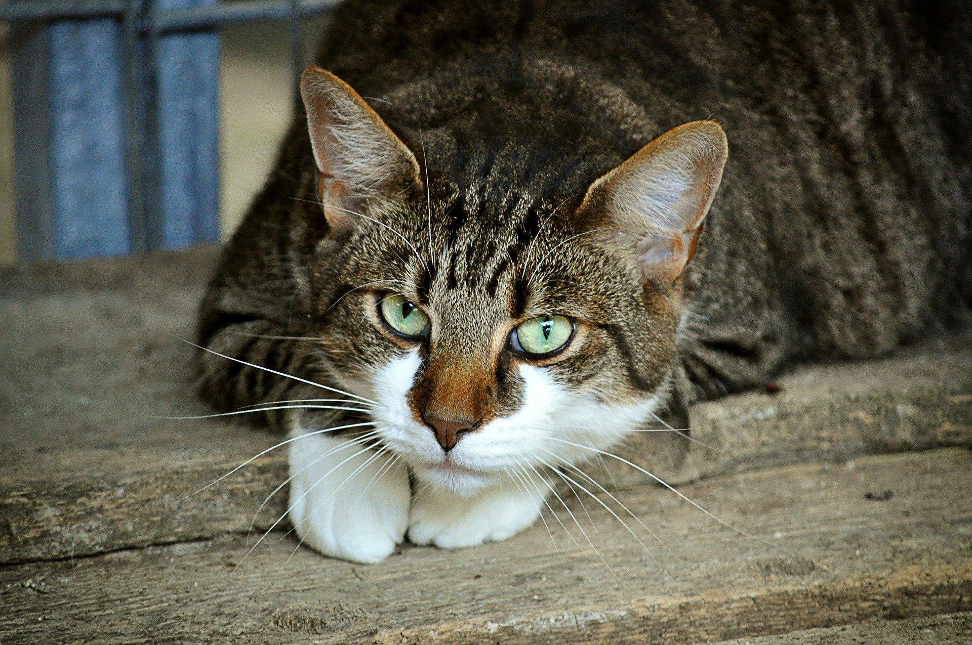 大陸老翁遛狗 被從天而降的小貓砸昏