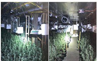 電費高達萬元 紐約華男屋內種大麻被逮