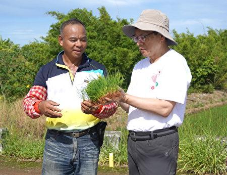種稻達人社子國小家長會會長曾德波先生(左)與黑松教育基金會董事長張斌堂(右)分享插秧的技巧。